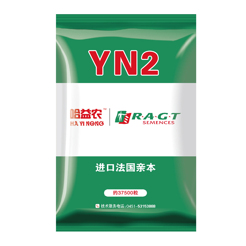 YN2.jpg